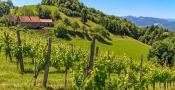 Die südsteirische Weinstraße – Gamlitz, Ratsch und Leutschach
